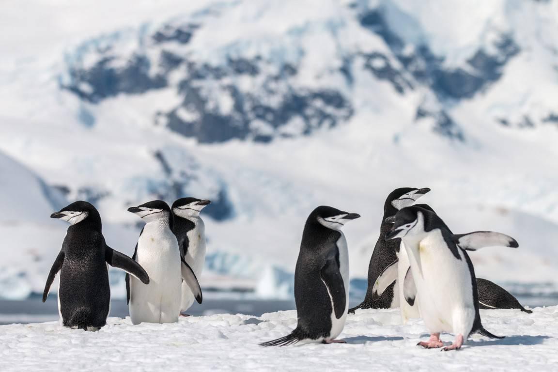 De ultieme Antartica-expeditie