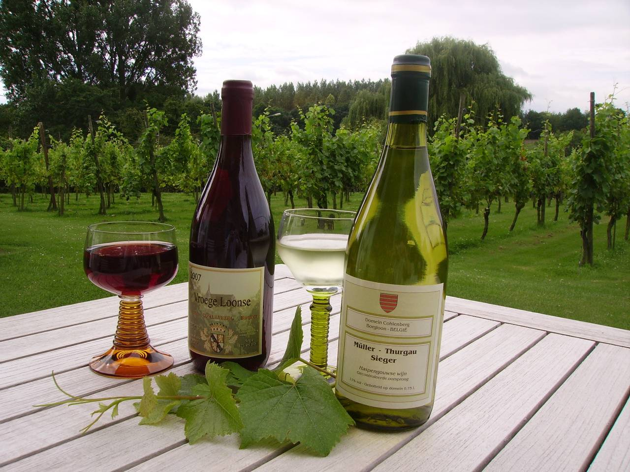 Geleid bezoek aan het wijndomein Cohlenberg en de abdij Mariënlof te Kerniel (Borgloon)