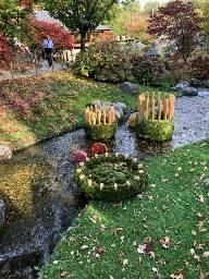 CHRYSANTENPRACHT in de Japanse Tuin van HASSELT (VOLZET)