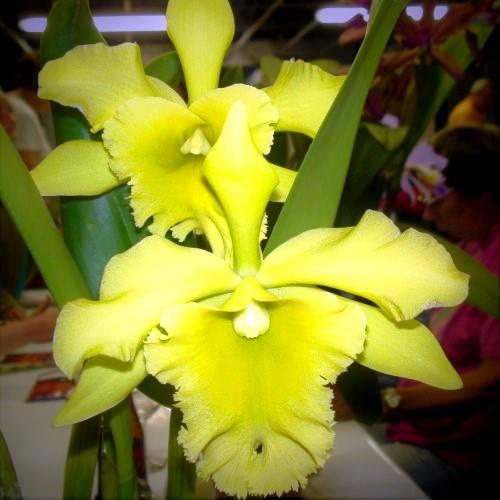 Bezoek aan de orchideeënkwekerij 'Orchid Jacky' in Kontich