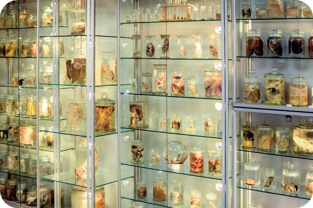 Bezoek Orgaanmuseum, gids dr. Johan Van Robays