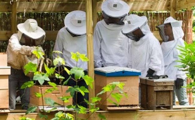 Bijen en ons voedsel
