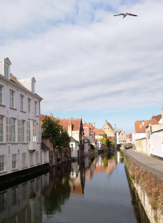Zomer zoektocht     Brugge - Sint Gillis
