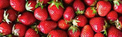 Aardbeien- en bessenkwekerij
