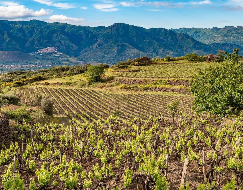 Sicilië. Het eiland van de Griekse mythologie en zijn inheemse druiven. Wijnavond