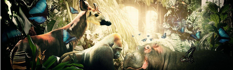 Zoo of Life
