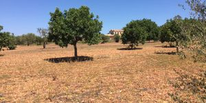 Building plot near Es Carritxo near Felanitx with building permit (Thumbnail 5)