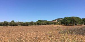 Building plot near Es Carritxo near Felanitx with building permit (Thumbnail 1)
