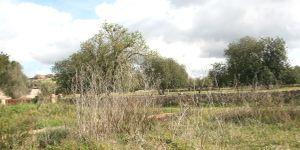 Grundstück mit Bauprojekt für eine Finca nahe Felanitx in ruhiger Lage (Thumbnail 2)