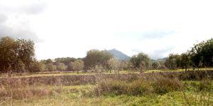Grundstück mit Bauprojekt für eine Finca nahe Felanitx in ruhiger Lage (Thumbnail 1)