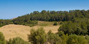 Fantastic plot with sea views close to Calas de Mallorca (Thumbnail 3)