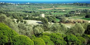 Fantastic plot with sea views close to Calas de Mallorca (Thumbnail 4)
