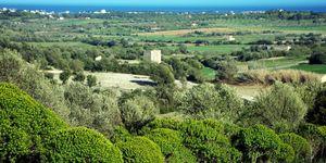 Grundstück in Manacor - Bauland mit Meerblick nah an Calas de Mallorca (Thumbnail 4)