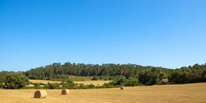 Grundstück in Manacor - Bauland mit Meerblick nah an Calas de Mallorca (Thumbnail 6)