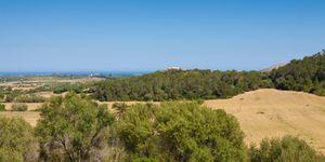 Grundstück in Manacor - Bauland mit Meerblick nah an Calas de Mallorca (Thumbnail 2)