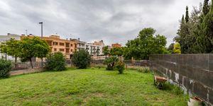 Apartment in Palma - Geräumige Wohnung mit Garten (Thumbnail 6)