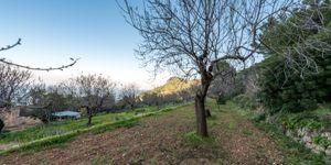 Finca in Banyalbufar - Landhaus zum Renovieren im Westen Mallorcas (Thumbnail 9)