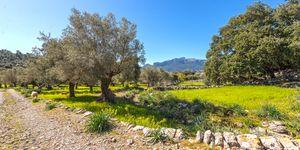 Finca in Escorca - Anwesen zum renovieren im Westen Mallorcas (Thumbnail 3)