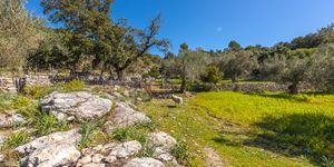 Finca in Escorca - Anwesen zum renovieren im Westen Mallorcas (Thumbnail 4)