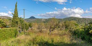 Grundstück in Es Capdellá - Bauland in idyllischer Lage Mallorca (Thumbnail 4)