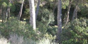 Plot in popular area in Santa Ponsa (Thumbnail 7)