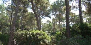 Plot in popular area in Santa Ponsa (Thumbnail 1)