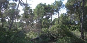 Plot in popular area in Santa Ponsa (Thumbnail 4)