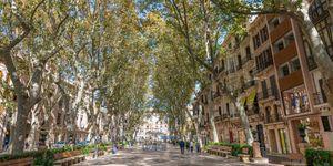 Exklusives Penthouse mit privater Terrasse in Palmas Altstadt (Thumbnail 7)