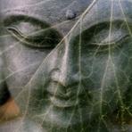 Buddha 1716251  340original