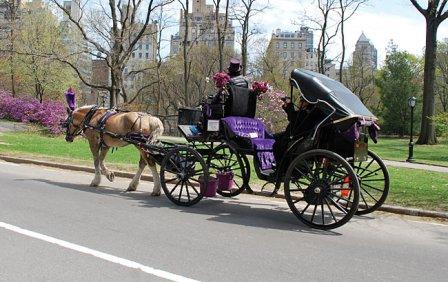 2-central-park-carriage_650.jpg