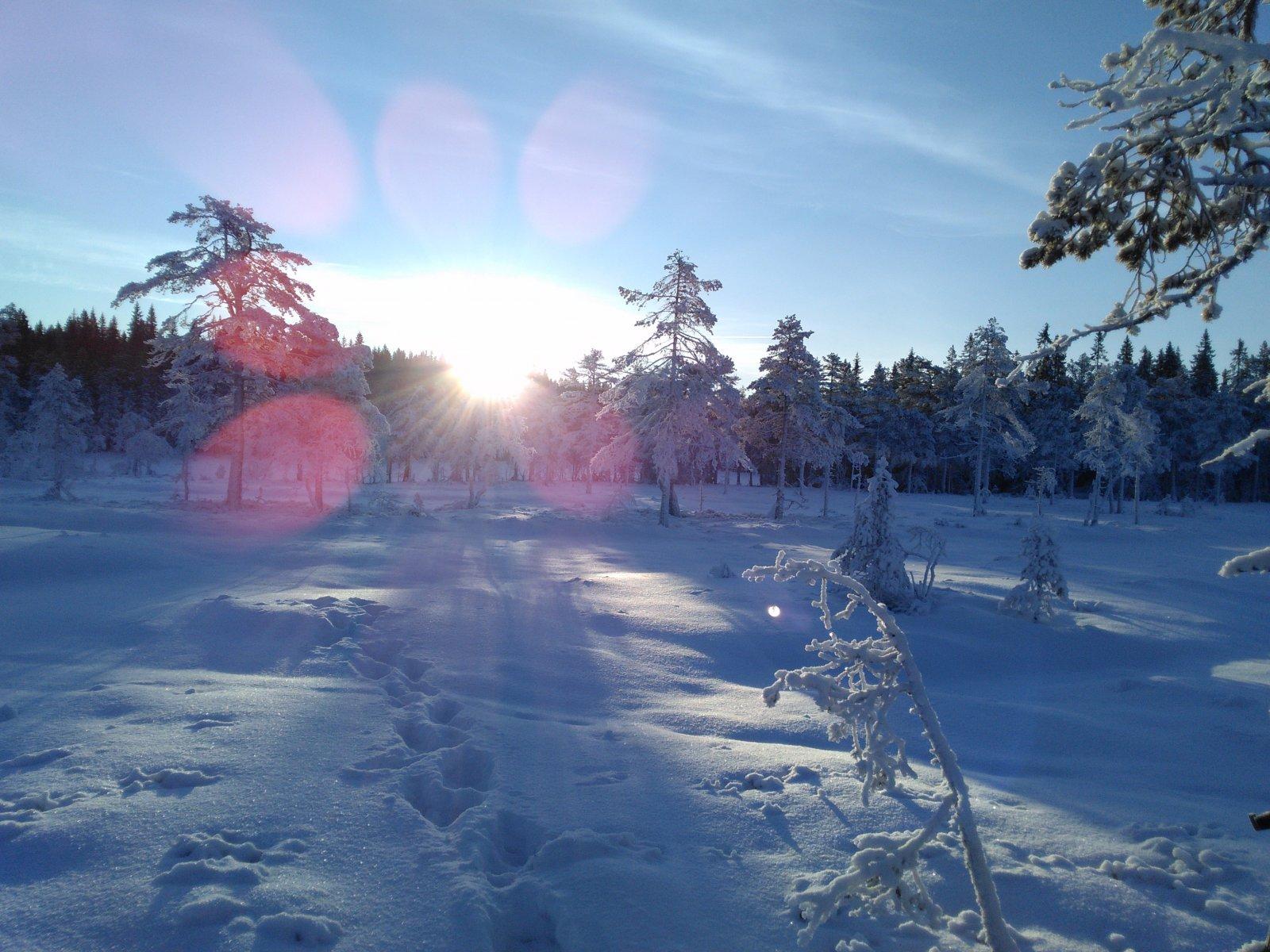 Førjulstid i Nordmarka 3 dagers telttur med pulk