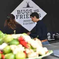 Bugs and Friends - Insekten a la Carte - Impression 2 Bugs and Friends - Insekten a la Carte