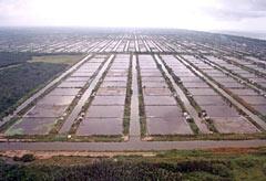 Garnelenfarm Deutschland