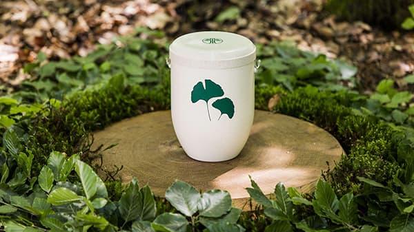 Die klassische FriedWald-Urne mit Ginkgo-Blättern steht auf einem Baumstamm