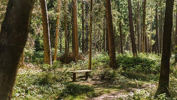 Bank unter Bäumen im FriedWald Lüneburger Heide