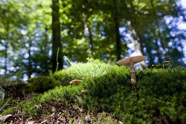 Pilz im FriedWald Michelstadt