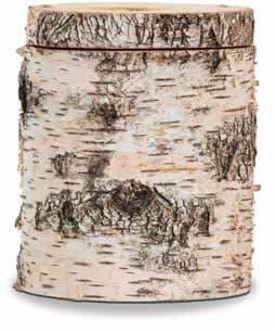 FriedWald-Urne Moorbirke für Kinder