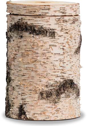 FriedWald-Urne Moorbirke