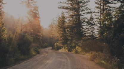 Eine Kieselstraße die sich durch einen dichtbesiedelten Wald schlängelt