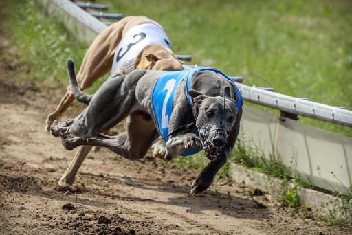What is Cryptocurrency? 3 (Greyhound race)