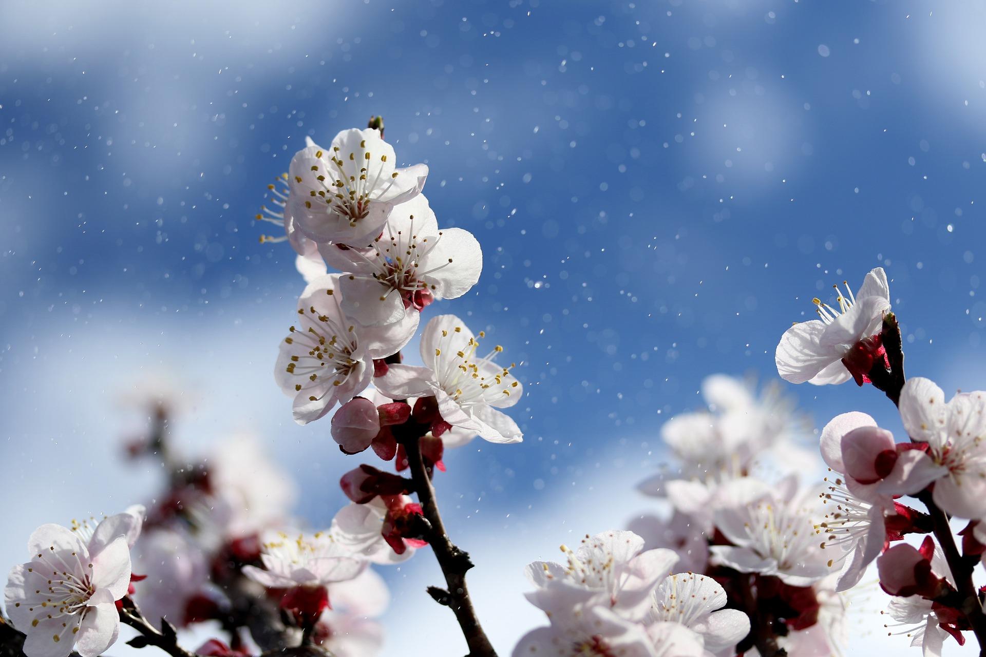 Kotipuutarhurin kevätvinkit