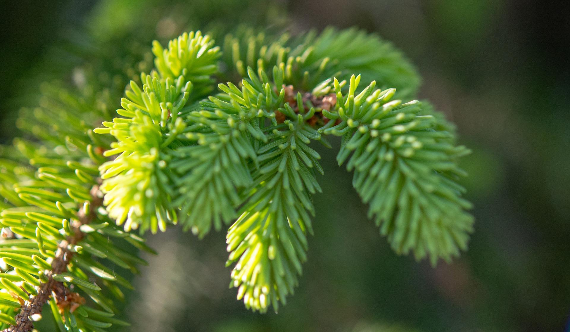 Asiantuntijaluentoilta: Joulukuusen ja muiden erikoispuiden kasvatus