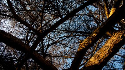 Petri Kuljuntausta: Laikun oraakkeli