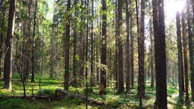 Metsänhoitoilta