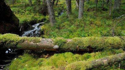 Avohakkuu tuhoaa metsän ja ilmaston