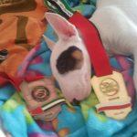 Super Luca Anacoreta: due medaglie ai World Professional Jiu-Jitsu Trial di Varsavia 5