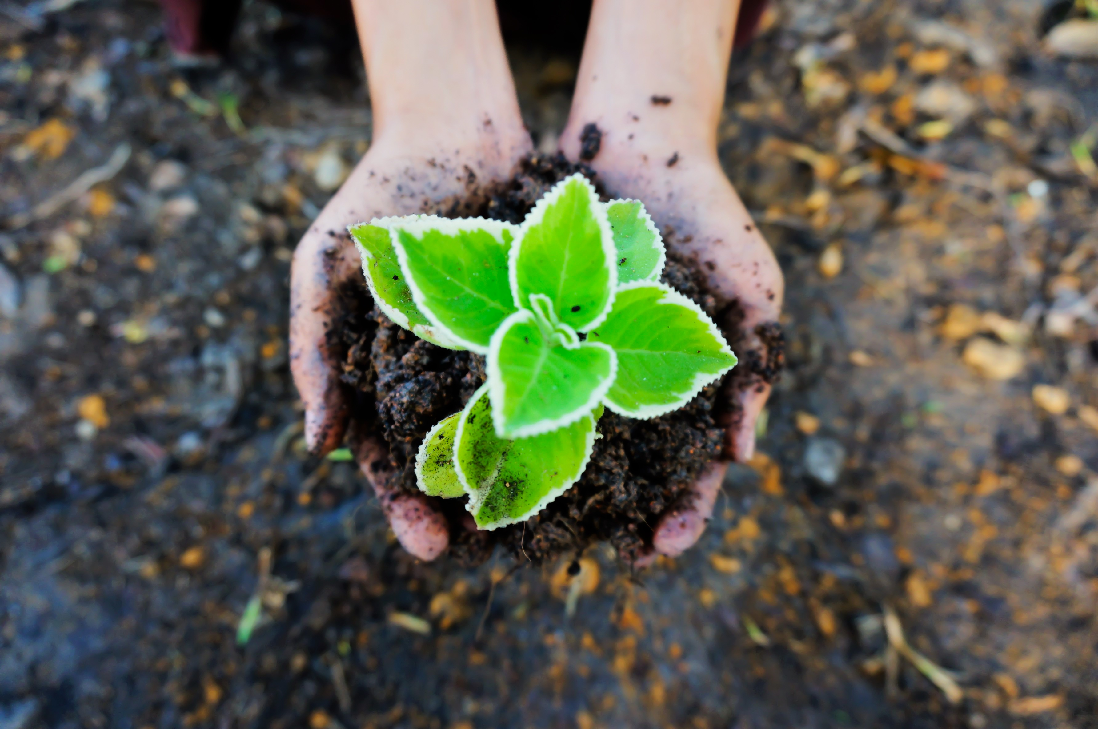 Towards a European Strategy for soil protection - cover