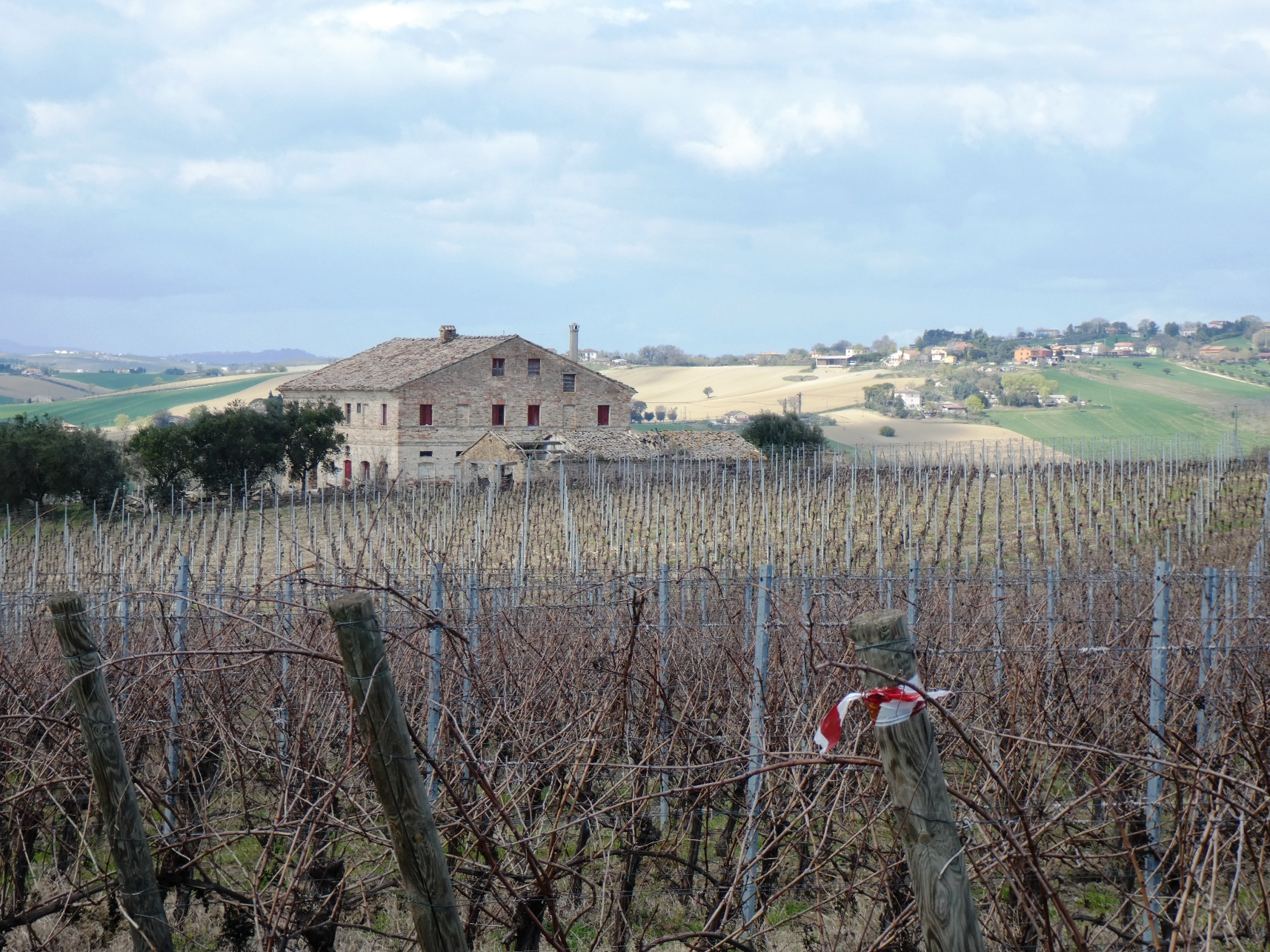 The monitoring visit to the Marche vineyards - cover