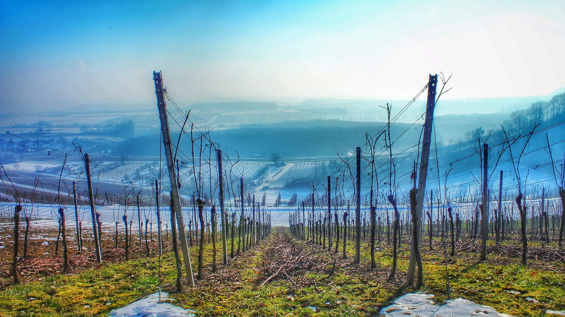 The health of our vineyards: the telltale signs - cover
