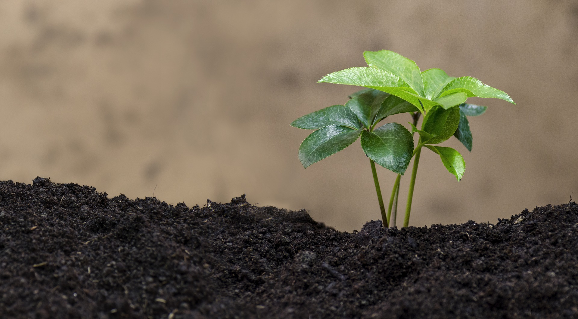 Comunicare la scienza per salvare il suolo - cover